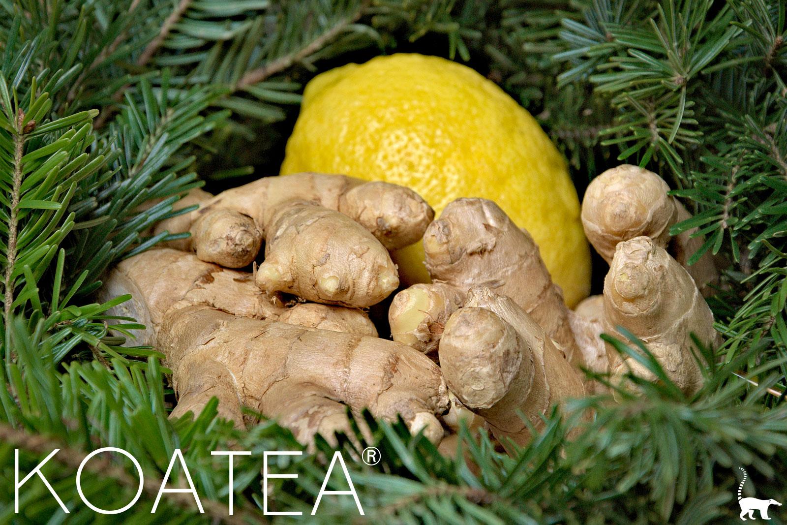 Citron et gingembre mûrs