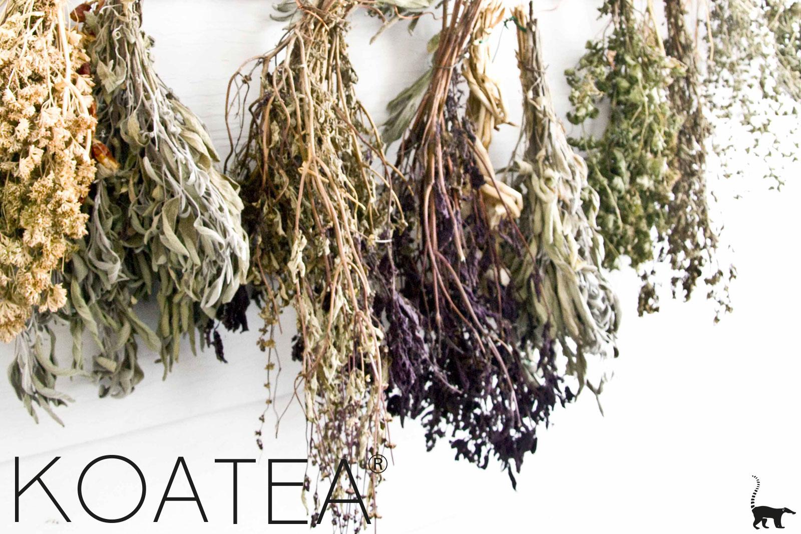 Véritables feuilles de thé séchées bio